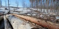Горожанам бесплатно раздают древесину