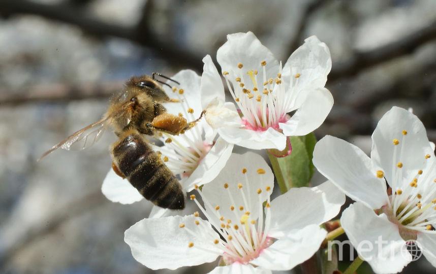 Аллергия на пыльцу растений - одна из самых распространённых. Фото Getty