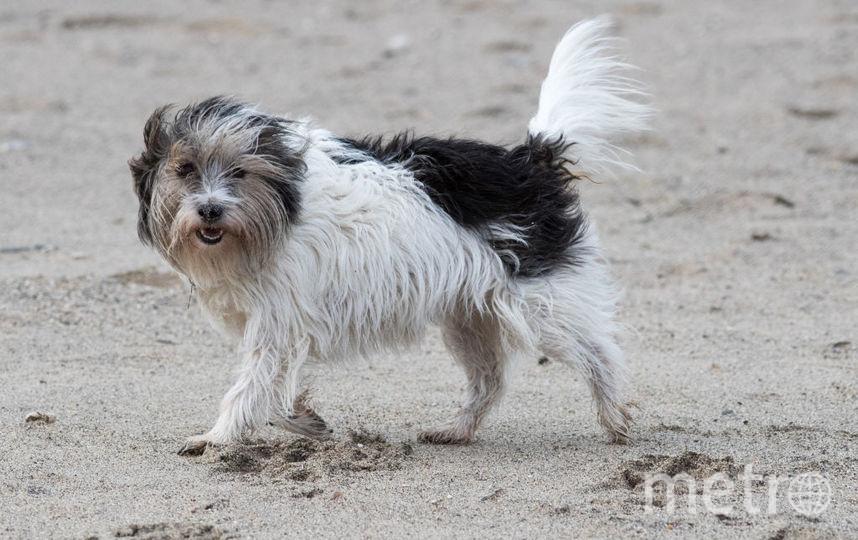 Житель Бурятии воровал и ел собак односельчан. Фото Getty