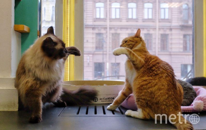 """Рыжий кот выйдет на сцену. Фото Алена Бобрович, """"Metro"""""""