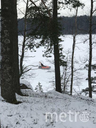 Фонд друзей балтийской нерпы. Фото vk.com