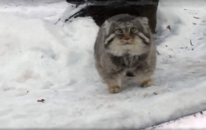 Скриншот из видео. Фото Московский зоопарк