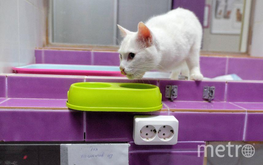 Кота готовят к ЧМ-2018. Фото Алены Бобрович