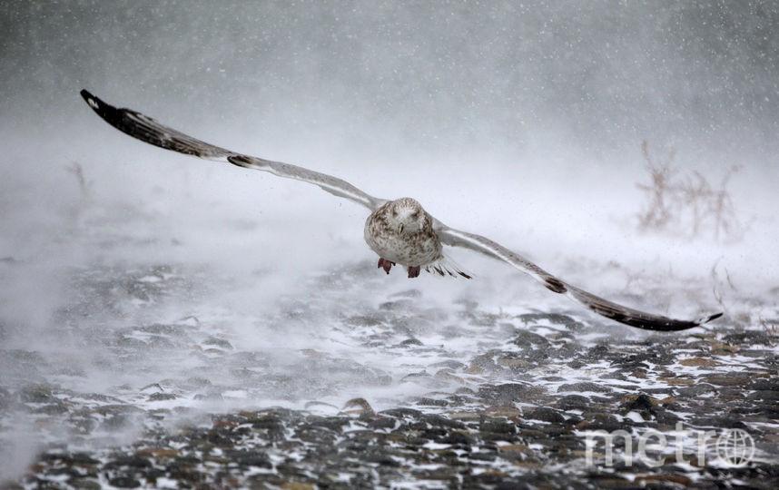 Григорий-весноуказатель: Приметы на Григорьев день. Фото Getty
