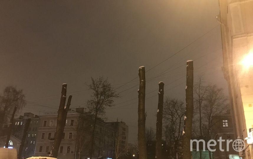 Петербуржцы выступили против грубой обрезки крон деревьев. Фото Красивый Петербург
