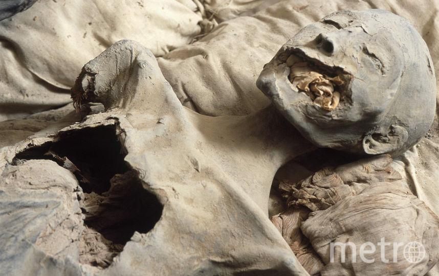 Мумия Нефертити. Фото Getty