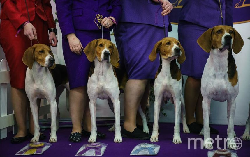 Westminster Dog Show-2018. Фото Getty