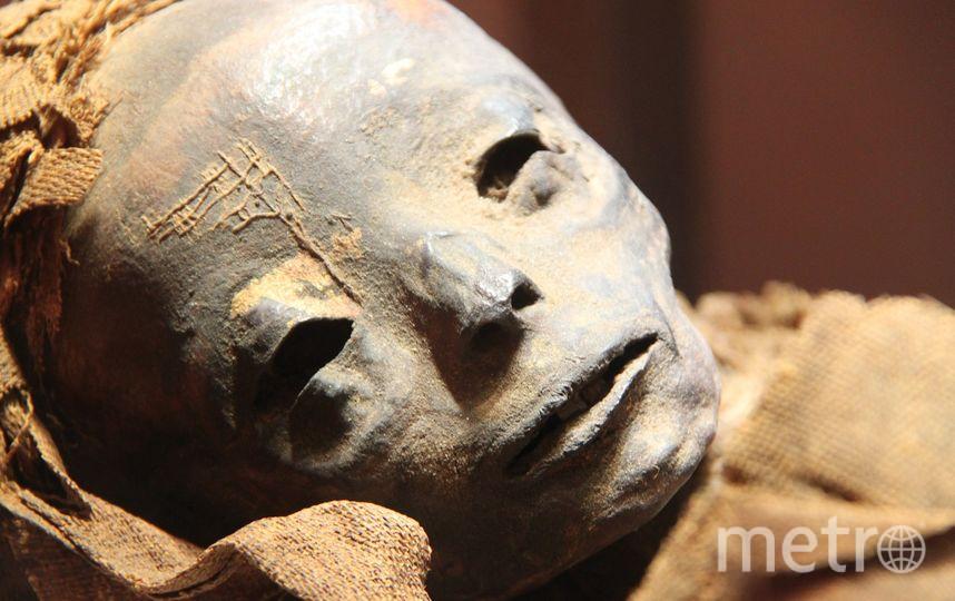 В Петербурге найдена мумия пенсионера в обнимку с резиновой женщиной. Фото Pixabay.com