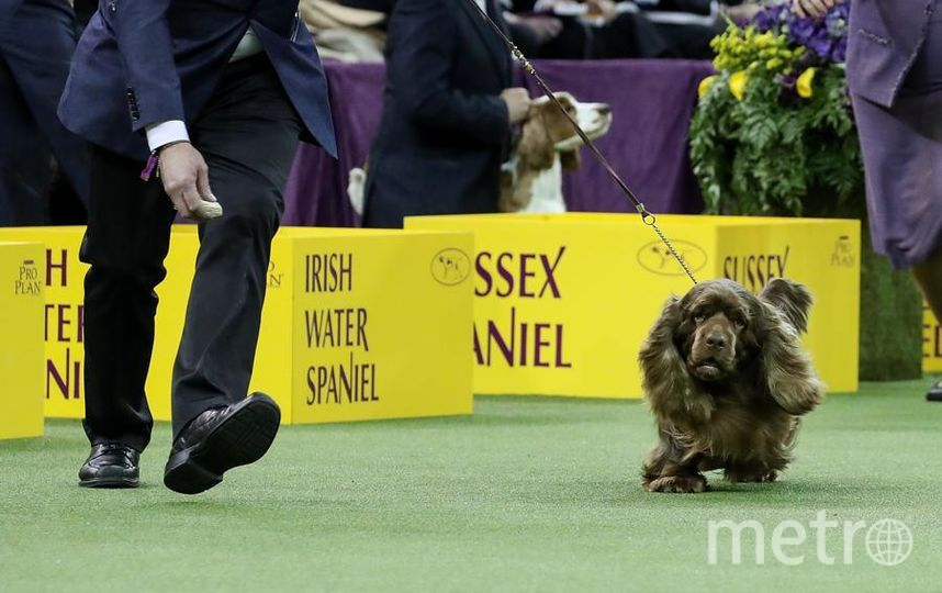 Westminster dog show-2018.  Финалисты. Фото Getty