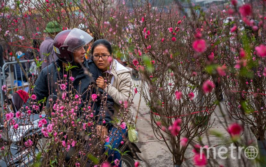 Китайский Новый год во Вьетнаме. Фото Getty