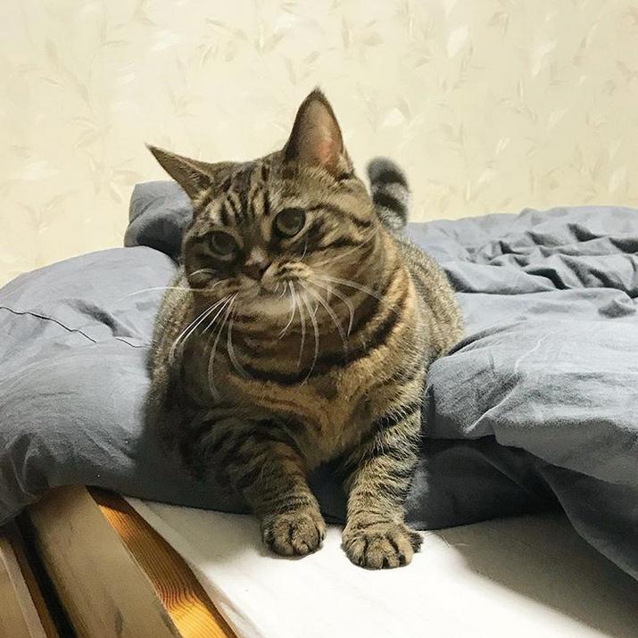Кошка Манго. Фото Скриншот Instagram: @bo_mang_co