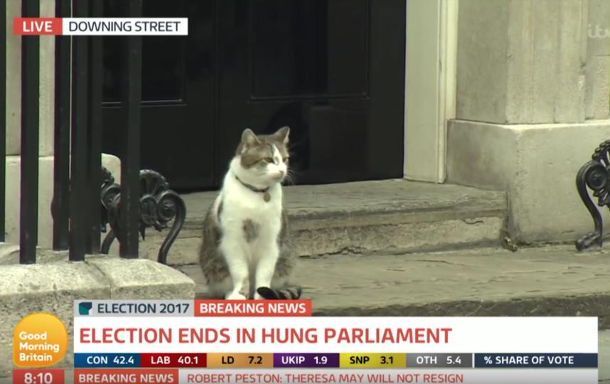 Главный мышелов британского премьера Палмерстон подрался с котом из МИДа. Фото Скриншот Youtube