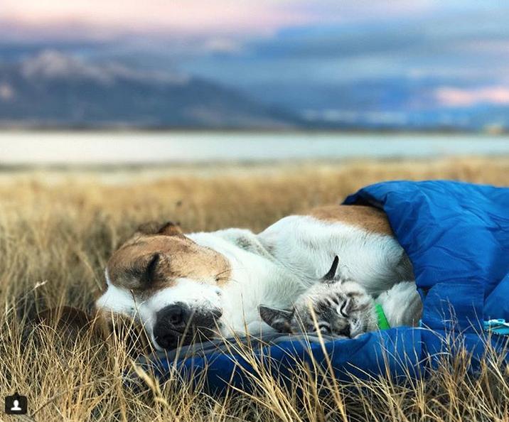 Генри и Балу любят путешествовать. Фото Скриншот Instagram: @henrythecoloradodog