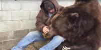 Американец показал, как убаюкивает 680-килограммового медведя. Видео