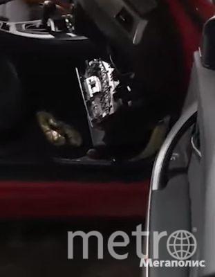 """Петербуржец купил машину с """"сюрпризом"""" в виде мёртвого питона: Фото. Фото Мегаполис"""