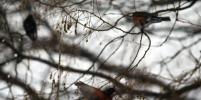 Москвичей попросили подкармливать оставшихся без еды птиц