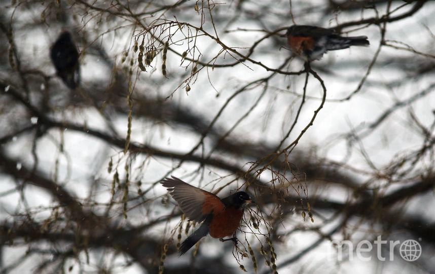 Птицы. Фото Getty