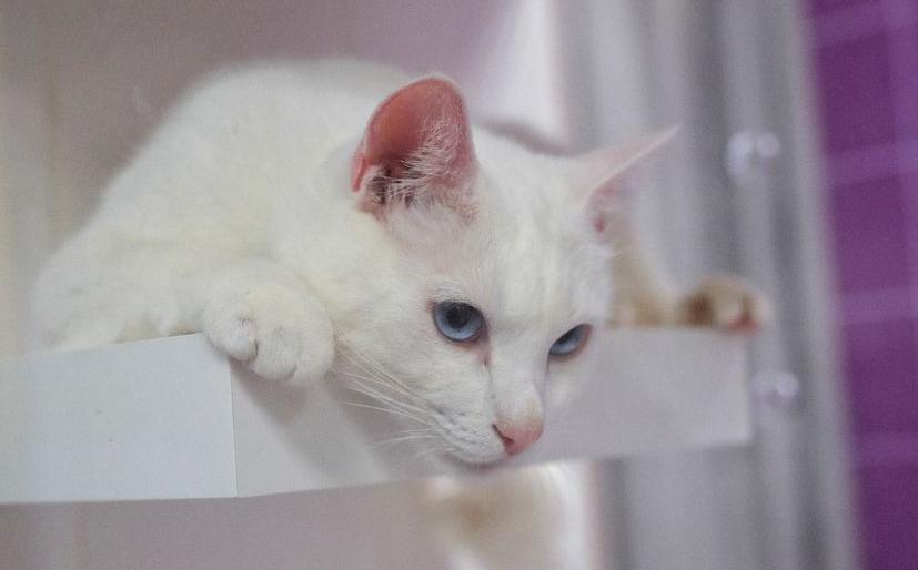 Эрмитажного кота-предсказателя Ахилла посадят надиету перед футбольным мундиалем