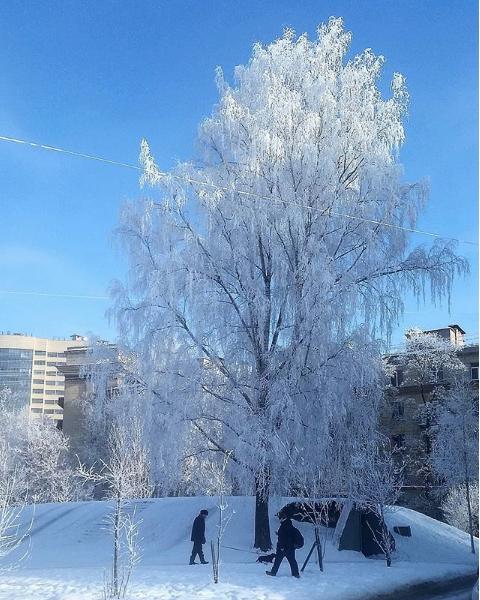 Фото морозного Петербурга делятся горожане. Фото https://www.instagram.com/gankovadi/