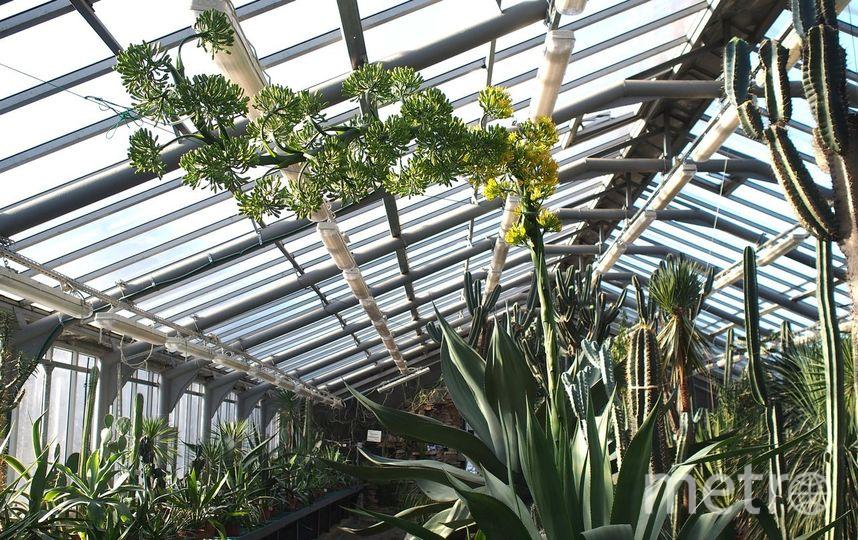 фото ботанического сада на алтуфьевском шоссе всех, помнит