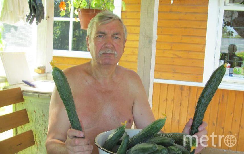 На фото мой дедушка Мудрак Юрий Григорьевич и его собственновыращенные огурцы вместо сабель. Его рекорд - 80см.. Фото Алина Станиславна