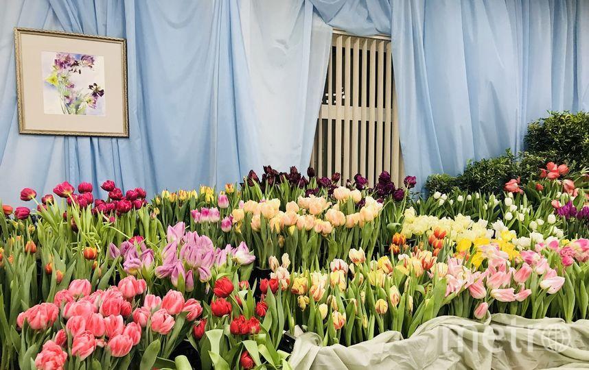Тюльпаны зацвели раньше срока. Фото Ботанический сад, vk.com