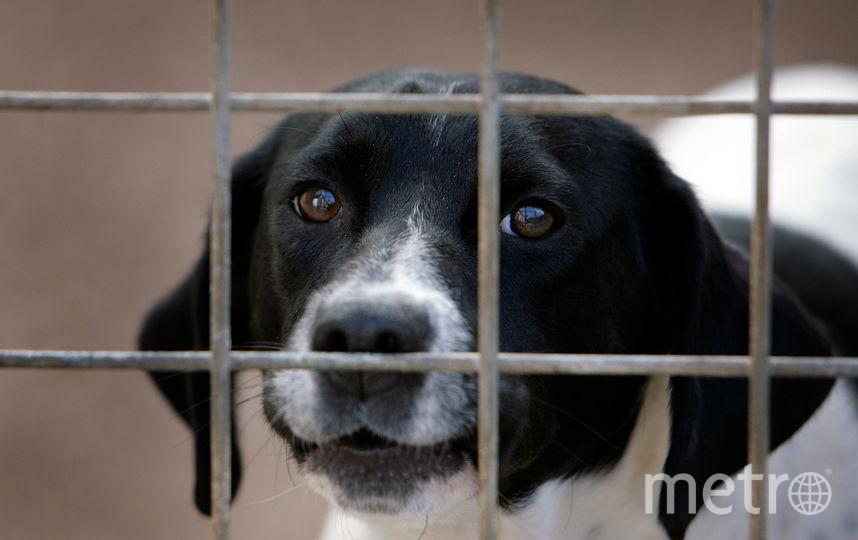 Бездомная собака. Фото Getty