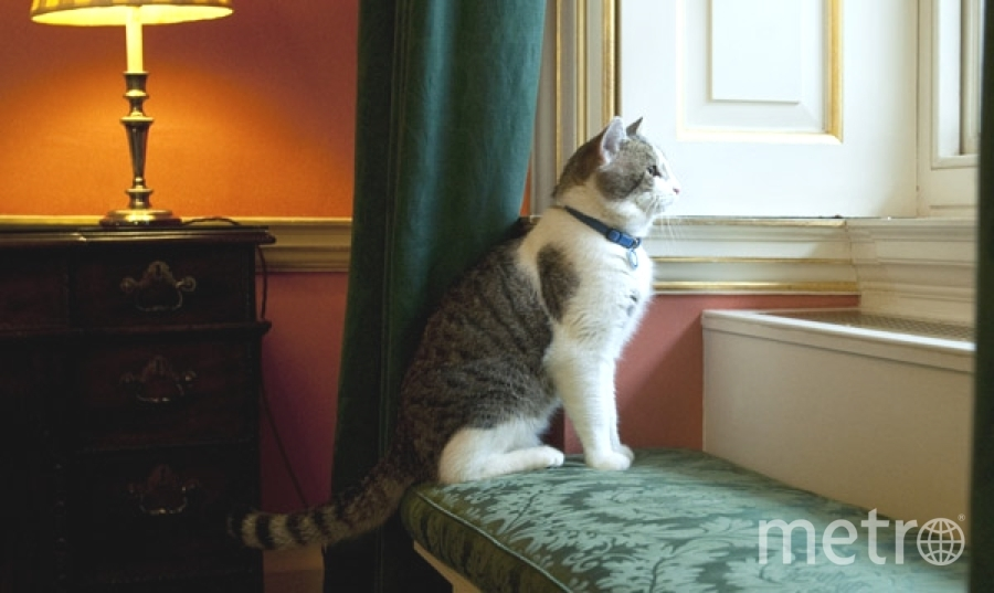 Стерилизовать можно как домашних, так и бездомных животных. Фото Getty