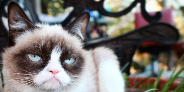 Кошка Грампи.