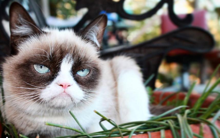Кошка Грампи. Фото Скриншот Instagram: @realgrumpycat