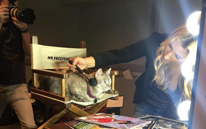 Кошка Нала. Фото Скриншот Instagram: @nala_cat