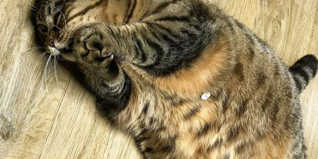 Кошка Манго.