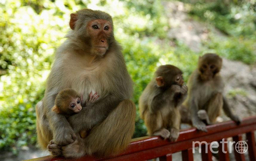 """Гости зоосада могут увидеть малышку в павильоне """"Приматы"""" на новой территории. Фото Getty"""