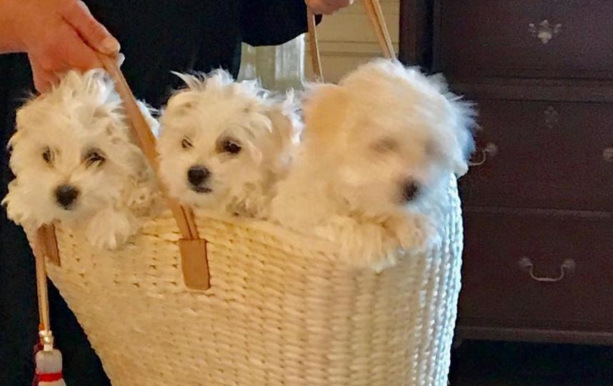Теперь у Барбары Стрейзанд три собаки. Фото Скриншот Instagram: @barbrastreisand