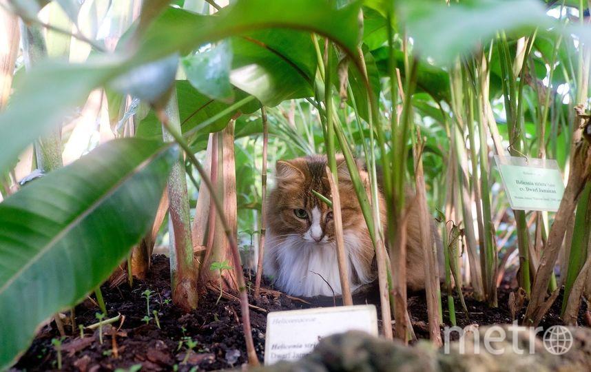 """Кошки Ботанического сада. Тася любит прятаться в тропических зарослях. Фото Алена Бобрович, """"Metro"""""""