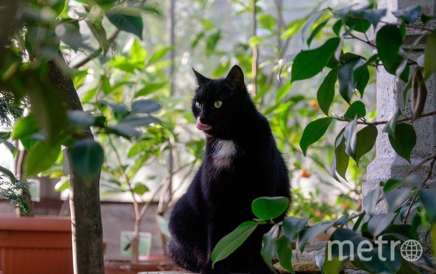 """Кошки Ботанического сада. Фото Алена Бобрович, """"Metro"""""""