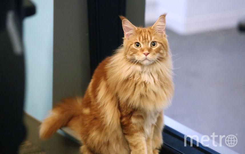 Москвичи просят запретить ветеринарам калечить котов. Фото Getty