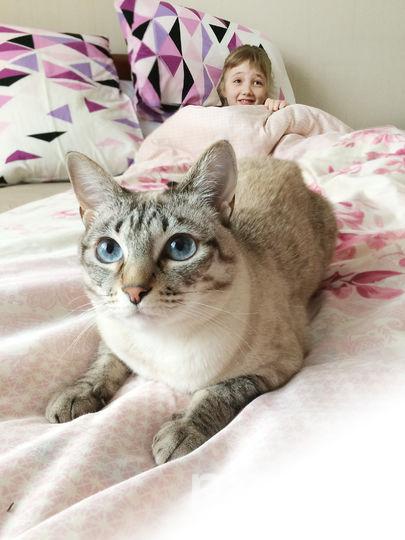 Через неделю повторил процедуру с ушибом мягких тканей у ребёнка. Фото Фото и кошка автора.