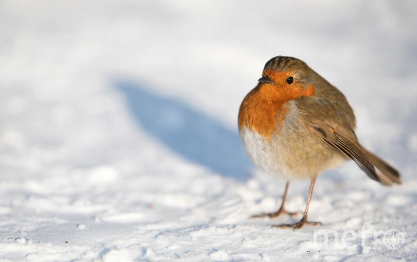 Холодно будет еще почти весь март. Фото Getty