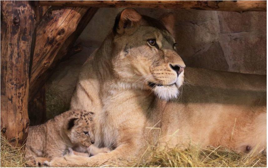 Ленинградский зоопарк. Фото vk.com/spbzoopark