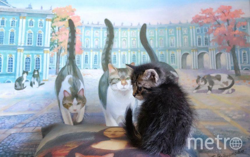 """Новое государство находится на территории """"Республики кошек"""". Фото Алена Бобрович, """"Metro"""""""