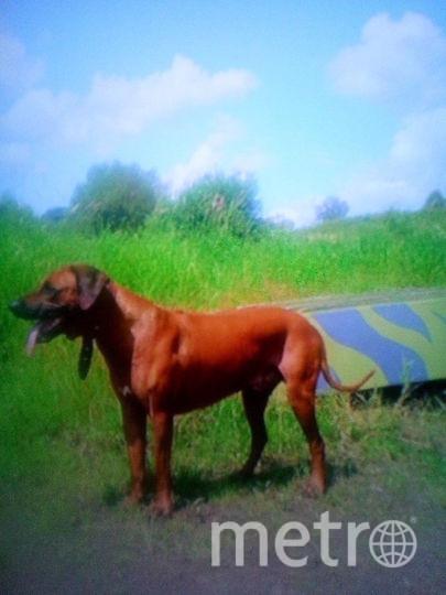 Тот самый пёс, ставший яблоком раздора. Фото предоставила Ольга К.