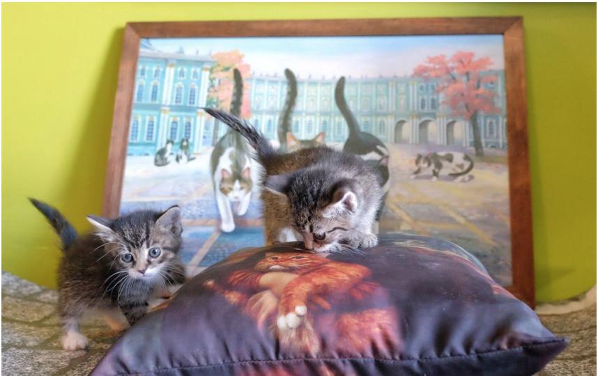 """Республика кошек. Фото Алена Бобрович, """"Metro"""""""