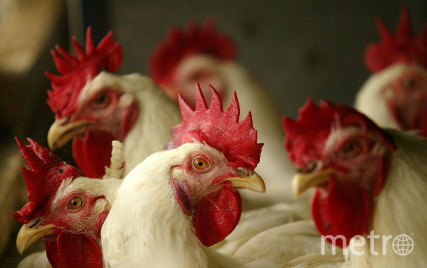 Курица. Фото Getty