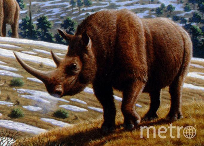 Шерстистый носорог в типичном биотопе (в представлении художника).