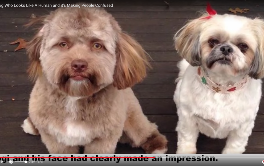 Пёс по кличке Йоги. Фото Скриншот Youtube