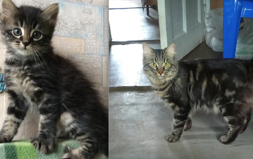 Моего котика зовут Федя. Скоро ему будет три года. Родился 12 апреля 2015 года. Фото Ольга Жукова.