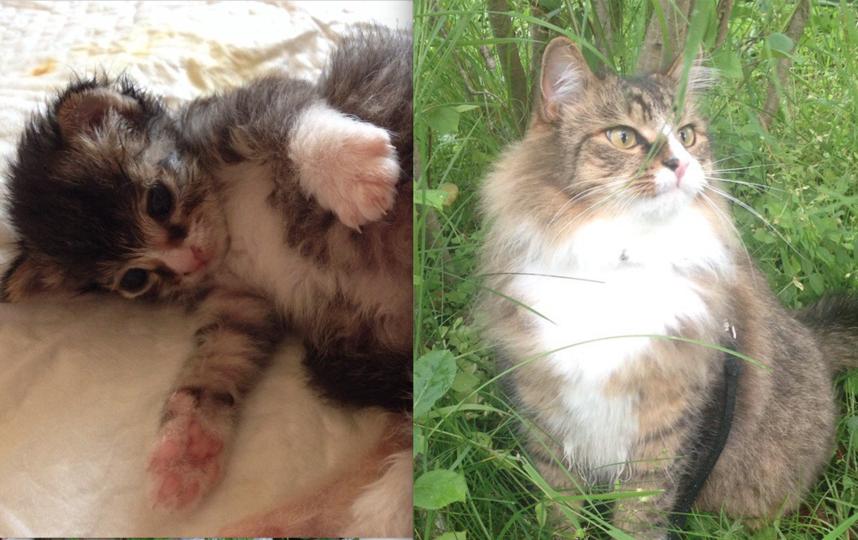Нашего кота зовут Тимофей. Сейчас ему 4 года и он любимец всей семьи. Мы его нашли новорожденным котенком на улице, выходили, выкормили. На фото, где он спит - ему всего 5 дней, еще слепой, спит с грелками и игрушками, чтоб теплее было и не скучно. Фото Светлана Петриленкова