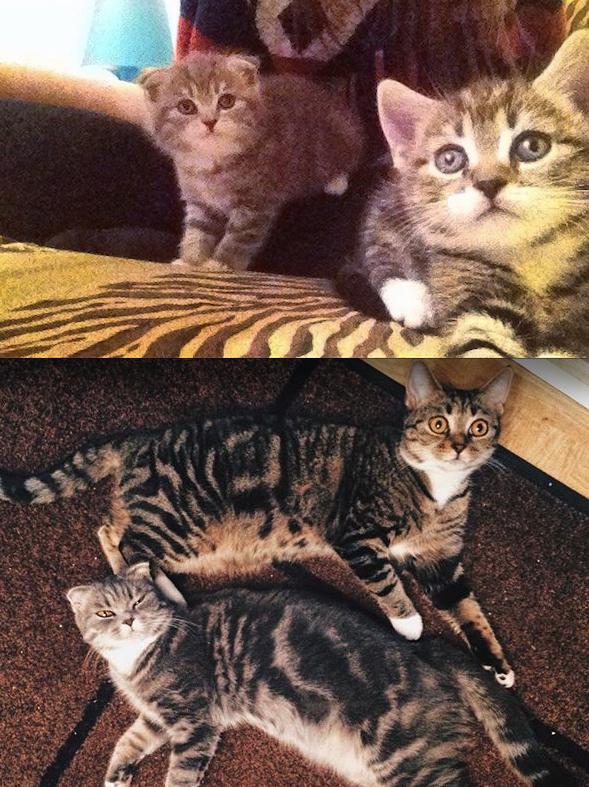 3 месяца -1 год. Две сестренки Мишка и Хлоя. Все всегда делают вместе. Фото Ксения Крамер