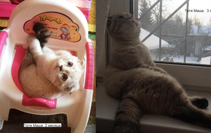 Наша Тетя Маша очень спокойная и ласковая кошка. На фото ей 2 месяца и 3 года. Мечтательна и невозмутима. Считает себя главной в доме. Согнать ее с насиженного места невозможно , проще взять и переложить. Она возмутится, но злобничать не будет. Фото Галина